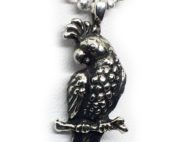 parrot sterling image